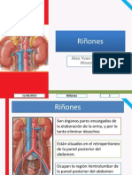 Anatomía de Abdomen