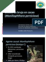 Escoba de Bruja en Cacao (Moniliophthora Perniciosa