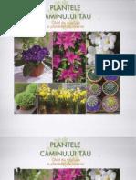 Plantele Caminului Tau
