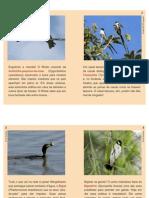 Aves Do Parque