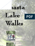 Shasta Lake Walks