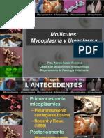 16 Mycoplasma y Urea Plasma Dicembre 2011