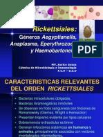 19 plasma Haemobartonella Eperytrozoon y A Egyptian Ella 2012