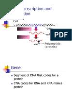DNA Transcription Amp Trasnlation