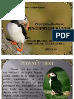 Papagalii-de-mare2
