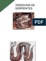 MORDEDURA+DE+SERPIENTES
