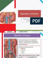 Histología Aparato Urinario