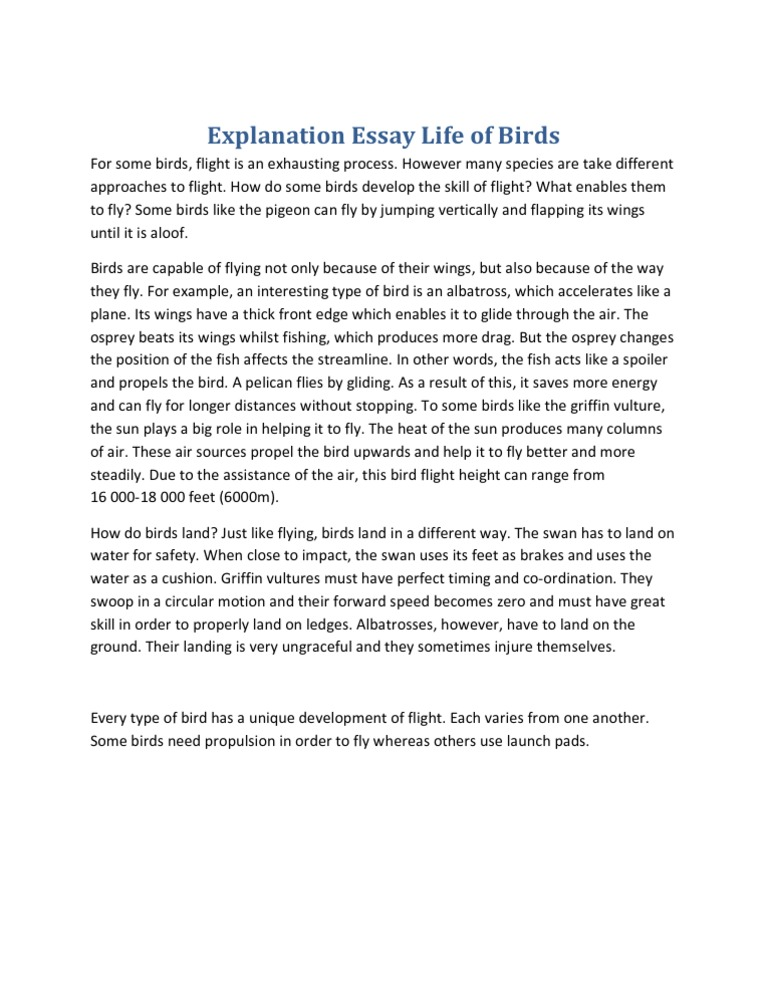 Informational Essay Example Example Of Explanation Essay Example Of