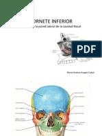 Anatomia ¨Cornete inferior¨
