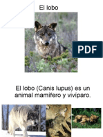 presentación del lobo