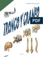 Tronco y Craneo