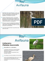 Estuario Do Tejo -Aves2