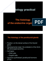 Histology of the Endocrine Organs 2