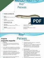 Estuario Do Tejo -Peixes