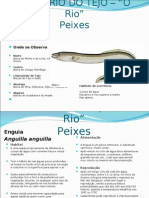 Estuario Do Tejo -Peixes