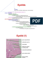 Histology of the Eyelid