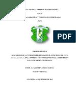Informe Tecnico-eddie Vasquez