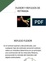 Reflejo Flexor y Reflejos de Retirada