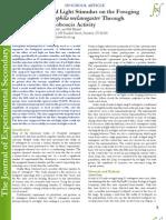 The Effect of Red Light Stimulus on the Foraging Behavior of Drosophila melanogaster Through Measuring the Proboscis Activity