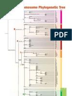 2005 Y Chromosome Phylogenetic Tree