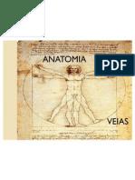 ANATOMIA VEIAS