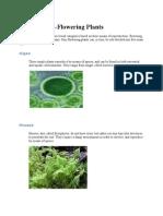 Types of Nonflowering & Flowering Plants