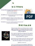 monográficos-el-metabolismo