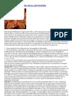 CULTIVO BASICO DE PHALAEONOPSIS