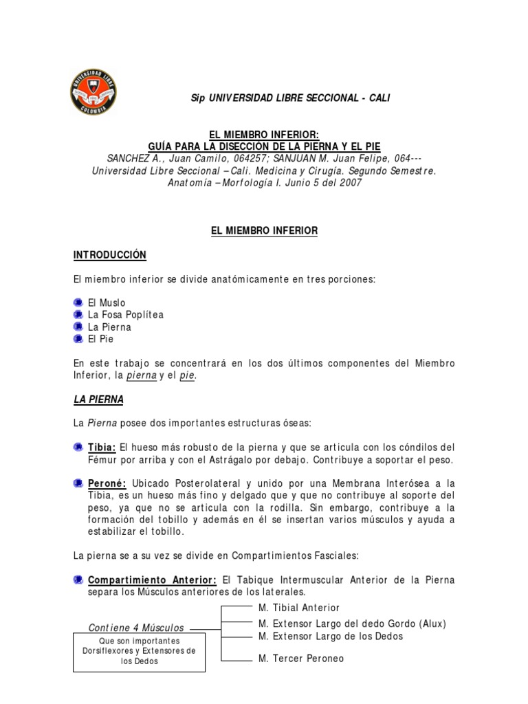 Diseccion Miembro Inferior Juan Camilo Sanchez, Juan Felipe Sanjuan