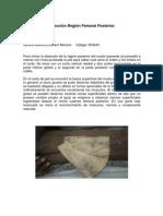 Disección Región Femoral Posterior- Sandra Milena Echeverri