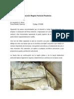 Disección Región Femoral Posterior-Paola Botello