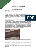 Diseccion Femoral Ante Rome Dial Derecha - Alexis Ibarra
