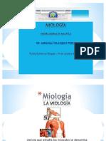 Miología diapositiva