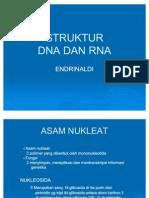 Struktur Dna Dan Rna