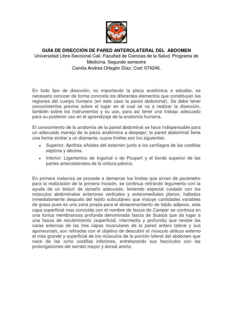 Diseccion Abdomen - Camila Andrea Ortegon