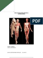 DisecciÓn de Pared Abdominal Anterolateral - Danna Liseth Rosero