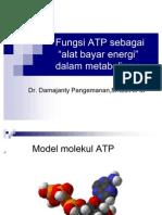 Fungsi ATP