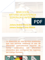 Diseccion de Arteria a Superior e Inferior - Juliana Andrea Florez y Johana Quintero Ortiz