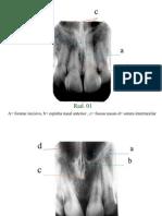 4931_Caderno de exercícios de anatomia radiográfica gabarito