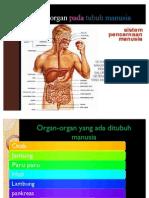 Sistem Organ Pada Tubuh Manusia