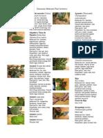 Dominican Medicinal Plants