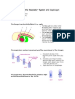 Development of the Respiratory System and Diaphragm