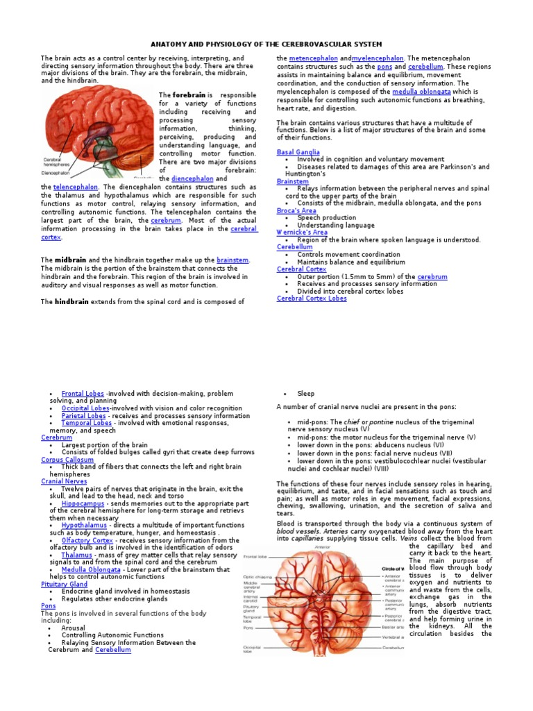 Anatomy and Physiology of the Cerebrovascular System | Cerebrum ...