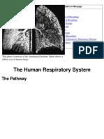 Lungs Brances CO2 Balance