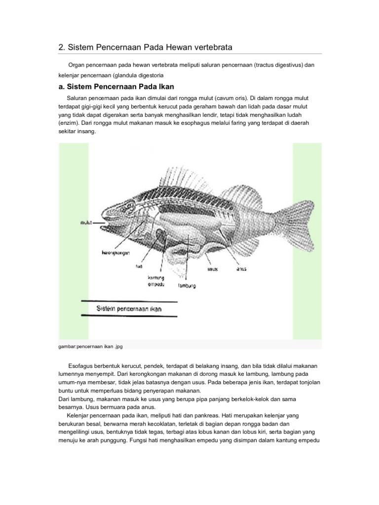 660 Koleksi Gambar Sistem Pencernaan Hewan Ikan HD