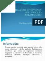 Células Que Intervienen En El Proceso Inflamatorio