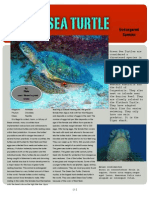 Keaton Mohney-Green Sea Turtle