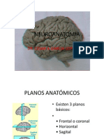 CLASE 2.1 NEUROANATOMIA