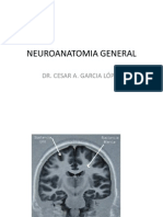 Clase 2.2 Neuroanatomia General