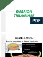 Embrión Trilaminar